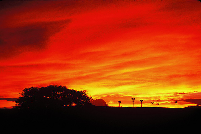 ... Crime + Cat Declawing + A Red Sky Predicts Weather | The Reality Check